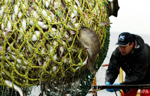 Wild Fish: It's Time For A Depth Limit On Trawling