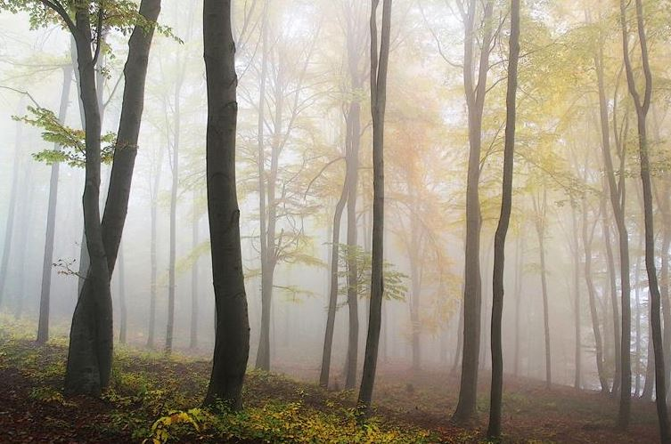 More Ways Forests Prevent Global Warming