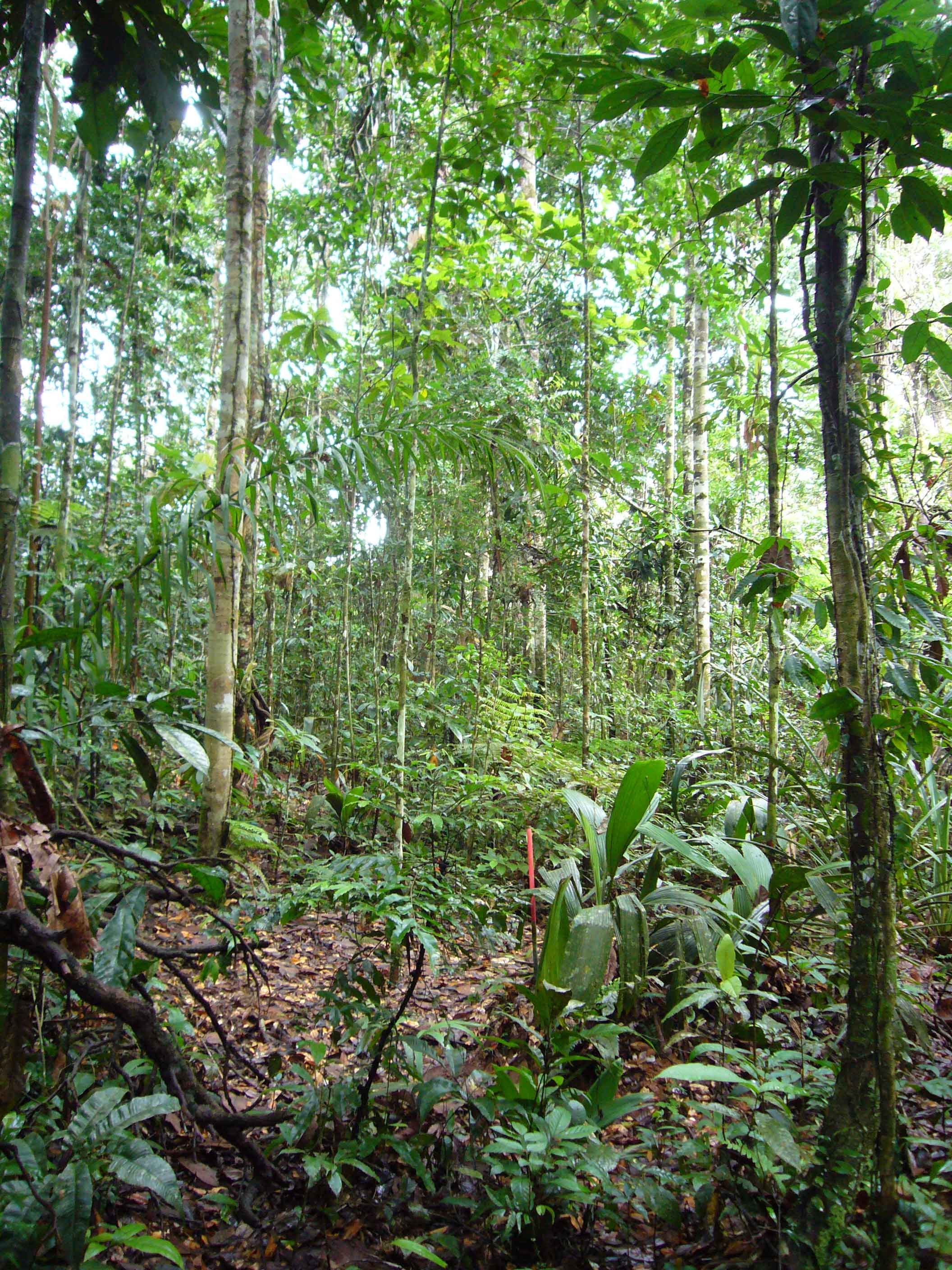 tropical rainforest essay Read and learn for free about the following article: tropical rainforest biomes.