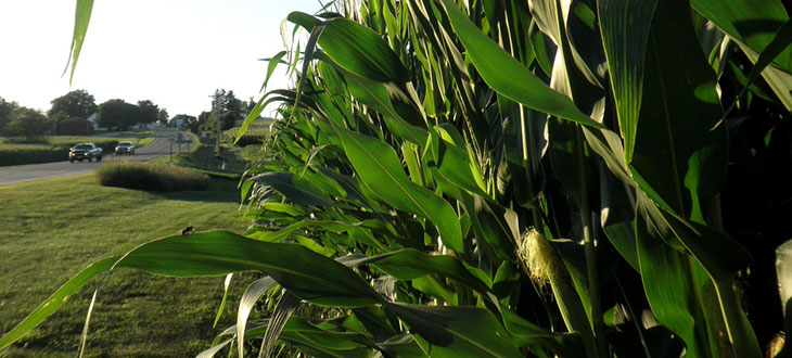 Turning Corn Cobs Into Car Fuel