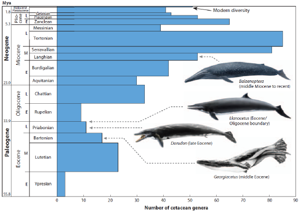 http://www.science20.com/files/images/whale1_0.png