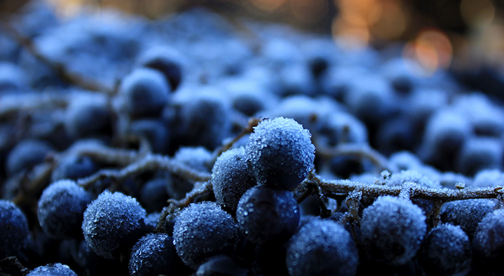 South Dakota Wine? New Grape Genetically Optimized For Extreme Temperatures