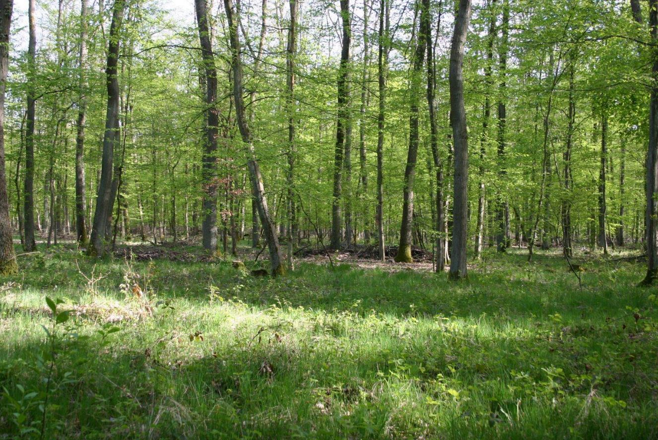 Forests Are The Green Lung Of The Earth - And The Younger The Better