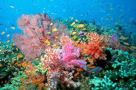 Coral Reefs: Most Vulnerable To The Effects Of Climate Change