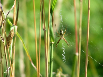 Spiders Get Extreme To Enforce Fidelity In Mates