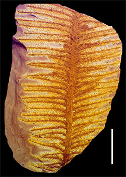 Ancient Climate Shifted Wildly