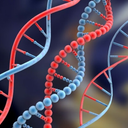 Gene Regulation – It's All In The DNA