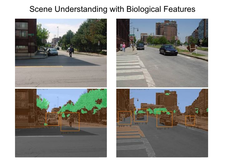 Poggio Lab Mimics How The Brain Recognizes Street Scenes